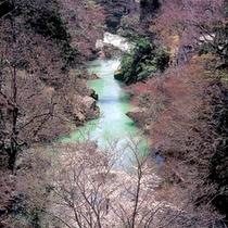 山中温泉観光名所【鶴仙渓】・春景色 露天風呂からの眺望