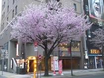 ホテル正面(春)