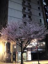 ホテル正面(春・夜)