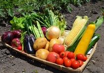 自家製無農薬野菜