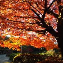 【周辺観光】南楽園の紅葉(見ごろ:12月)