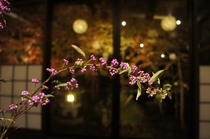 館内を彩る季節の草花