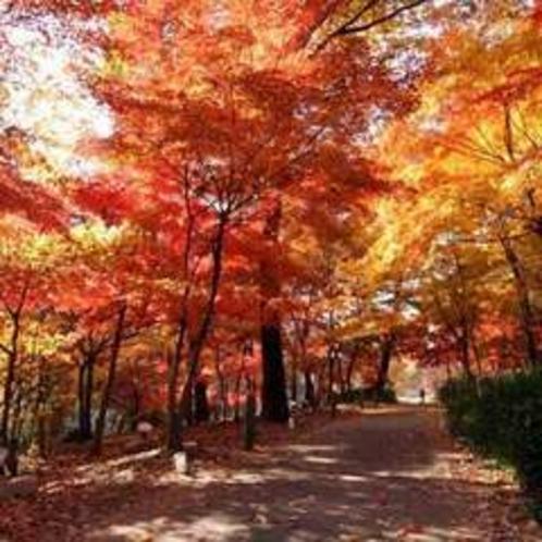 国営武蔵丘陵森林公園の紅葉(11月中旬〜12月中旬が見ごろ)