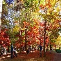 森林公園紅葉人