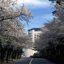 ホテルヘリテイジ全景【桜】