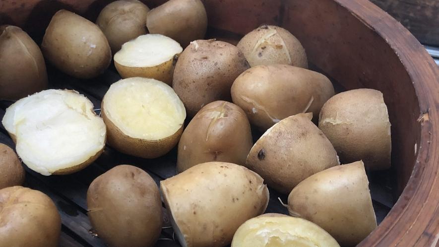 ヘリテイジファームで丹念に育てられた野菜の数々