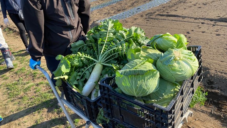 ヘリテイジファームで丹念に育てられる野菜の数々