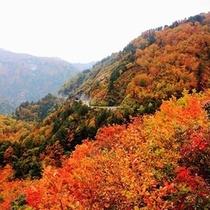 【紅葉の白山白川郷ホワイトロード】北陸紅葉の名所と言えばここ!絶景ドライブをお楽しみいただけます♪