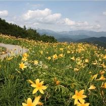 白山高山植物園 お花好きの方は必見!地元が誇る植物園です。