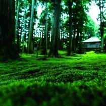【白山平泉寺】までは車で約30分。苔寺とも呼ばれる平泉寺は、幻想的な空間です。