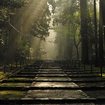 【白山平泉寺】の石畳。陽射しが差し込み、厳かな雰囲気です。
