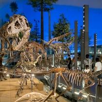 【福井恐竜博物館】までは 八鵬から車で30分!言わずと知れた人気スポットです♪