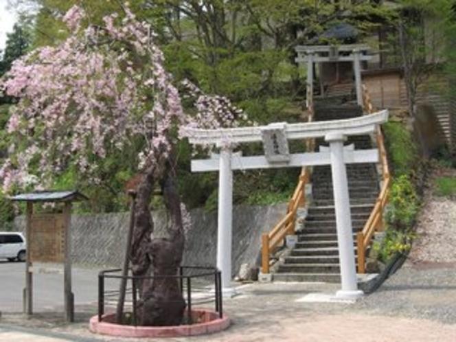 鶯宿温泉神社の桜