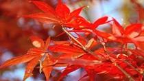 *秋の1日、紅葉狩りをお楽しみください(イメージ)