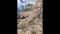 *長浜城と桜