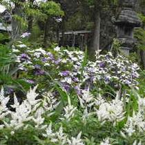 庭内の花 色々