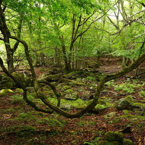 リラクシアの森