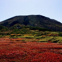裾合平周辺の紅葉・チングルマの草紅葉がまるで絨毯のように足もとを真っ赤に染めます。