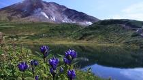 夏は大雪山固有の高山植物が数多く咲く、素晴らしい時期