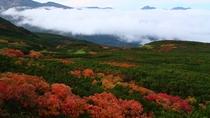 紅葉の先に雲海が広がる見事な絶景