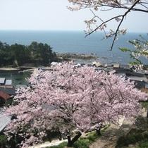 間人墓地公園から望む街並みと桜
