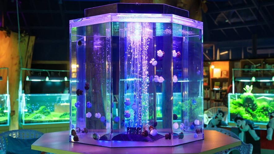 水中楽園アクアリウム