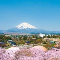 春の富士山と桜のコラボレーション