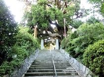 城願寺 階段