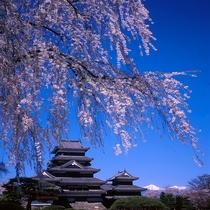 ◆春の松本城