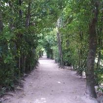 【備瀬フクギ並木】フクギテラスは備瀬フクギ並木の中にあります。樹齢250年 防風林 屋敷林