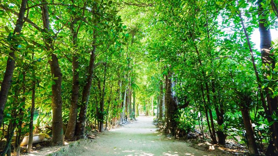 ・沖縄のパワースポット、フクギ並木