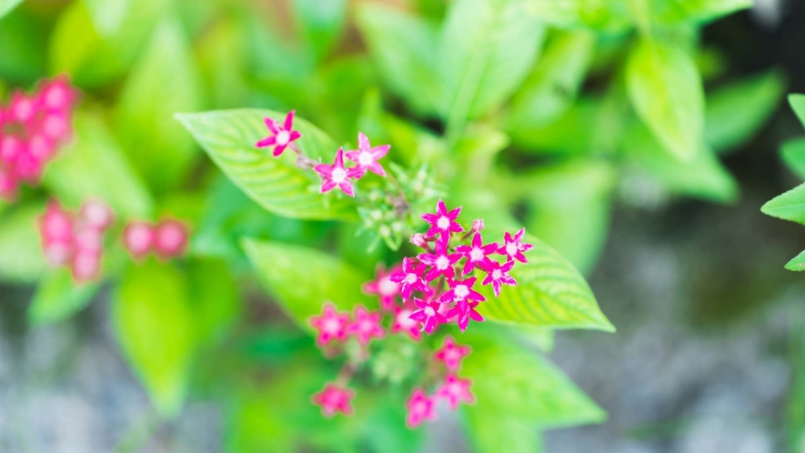 ・美しい植物に囲まれています
