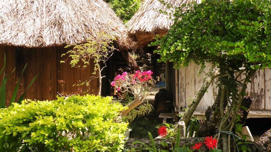 【ユンヌ楽園】亜熱帯植物の植物園です