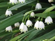 庭園の花々