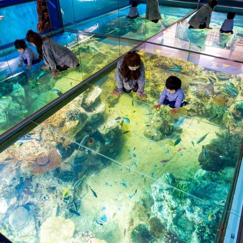 ■越前松島水族館<イメージ>