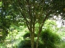 緑あふれる庭