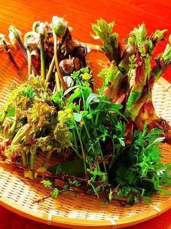 春にはたくさんの山菜が目を出します。お浸し、てんぷら、春の味をご堪能下さい。