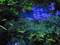 【☆6月限定☆】(^^♪ 歩いて5分の池を、当宿のあるじが手で掘り、育てた美しいホタルが舞います☆