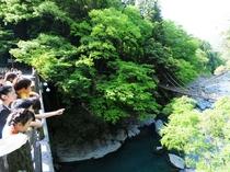 横から見るかずら橋・・・。渡る恐怖を感じてください!