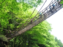 谷からの高さ13m! 日本三奇橋のこの橋にいちばん近い宿がかずらやです