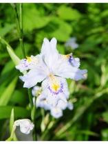 宿周辺に咲く花