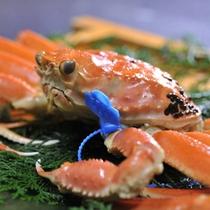 津居山活け蟹茹で蟹