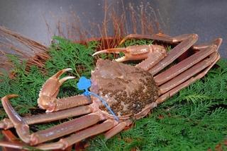◆【日帰り昼食】 活け松葉蟹1匹プラン「蟹刺し・甲羅焼・蟹鍋・蟹雑炊」(部屋食)