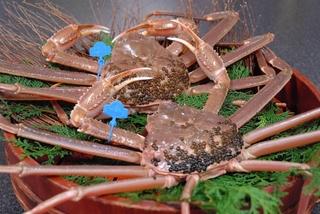 ◆【日帰り昼食】 活け松葉蟹2匹プラン「蟹刺し・焼蟹・蟹鍋・甲羅焼」(部屋食)