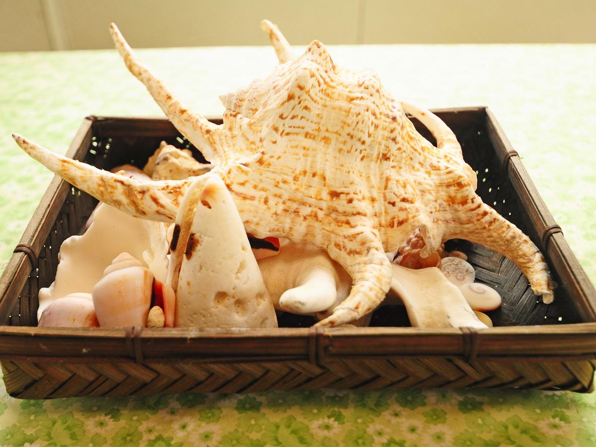 【施設内】サンゴや貝殻♪海に潜って見つけてください♪