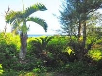 【ガーデン】緑の奥に見える果てしない海!一番近いビーチまでは徒歩3分程です!