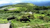 山荘から見た放牧牛