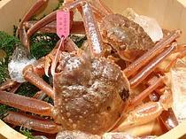 タグ付松葉蟹