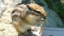 ◆オホーツクシマリス公園イメージ写真(※写真提供=網走市観光協会)
