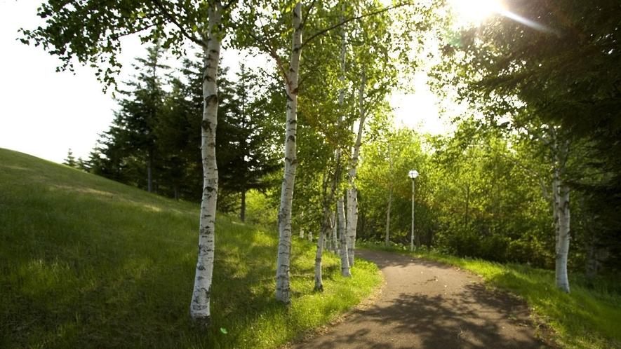 ◆呼人探鳥遊歩道/呼人半島にあります。大自然の中を散策しバードウォッチングを楽しむことができます。